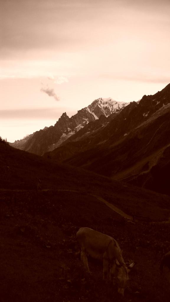 ane devant le mont blanc