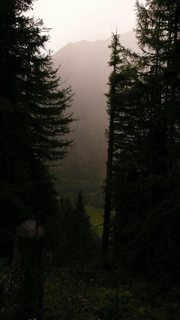 montée dans la foret sous la pluie le soir