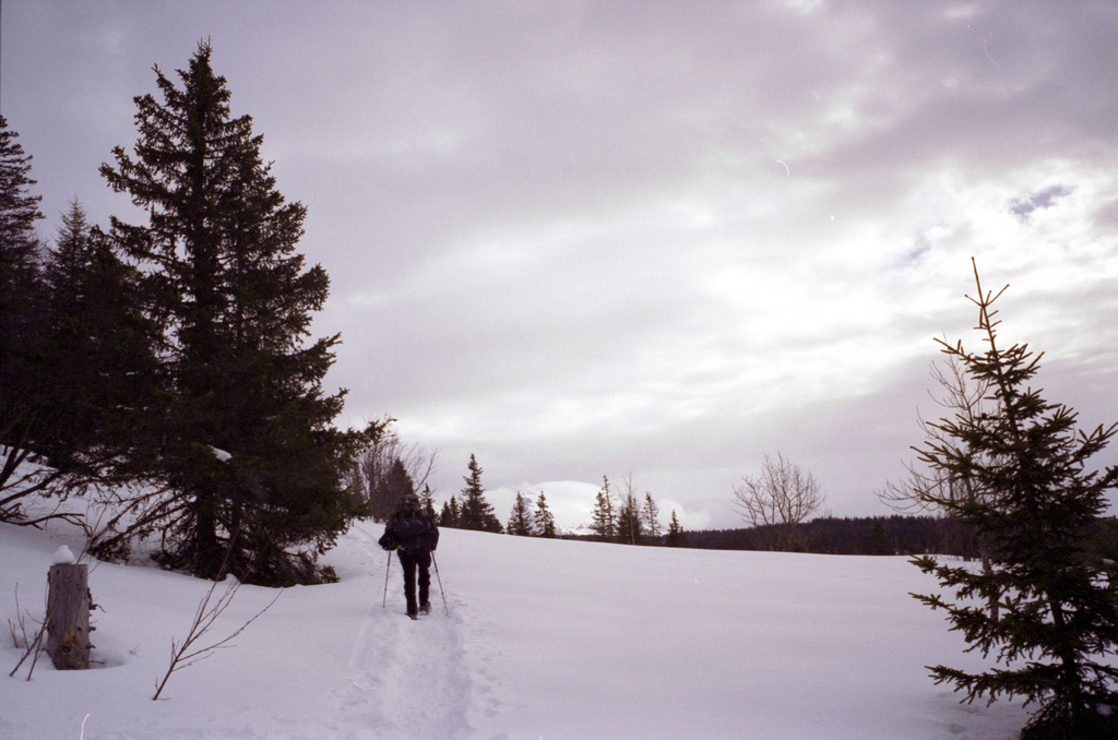 neige dans le vercors