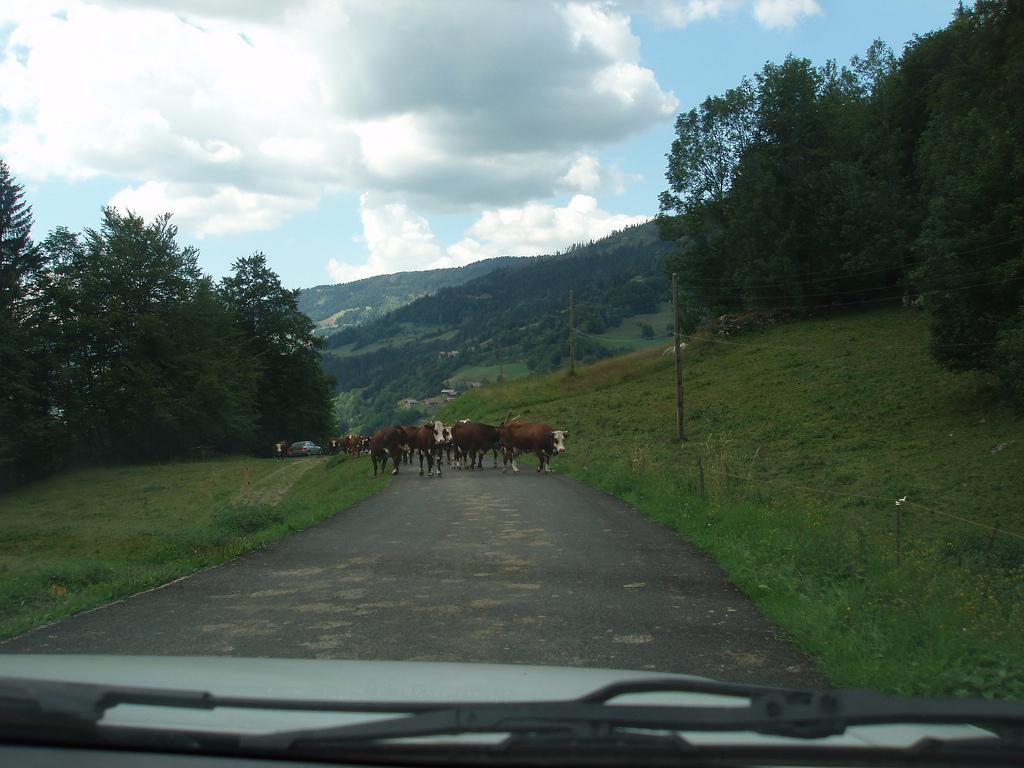 probleme: un troupeau de vaches sur la route