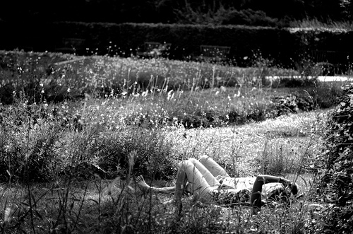 alongés dans l'herbe