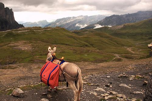 figaro regarde le paysage