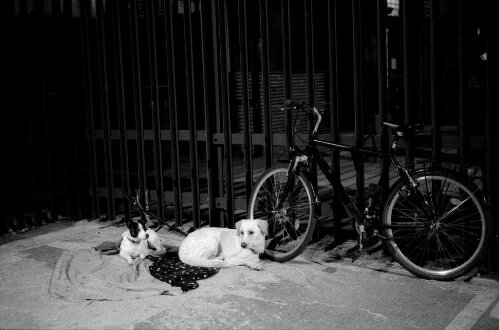 deux chiens et un velo