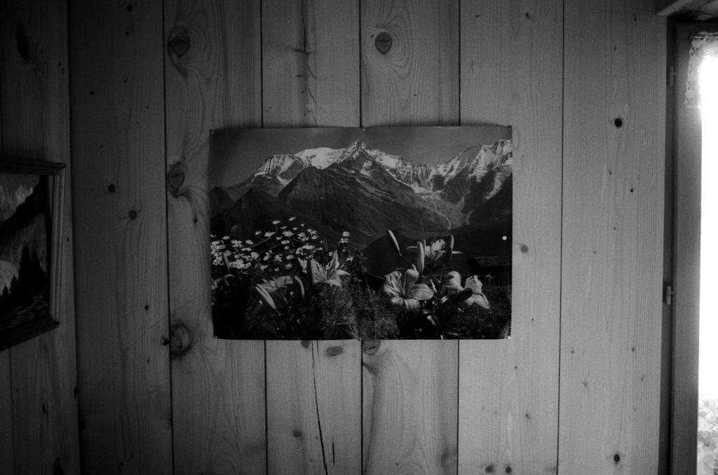 une photo du mont blanc avec des fleurs