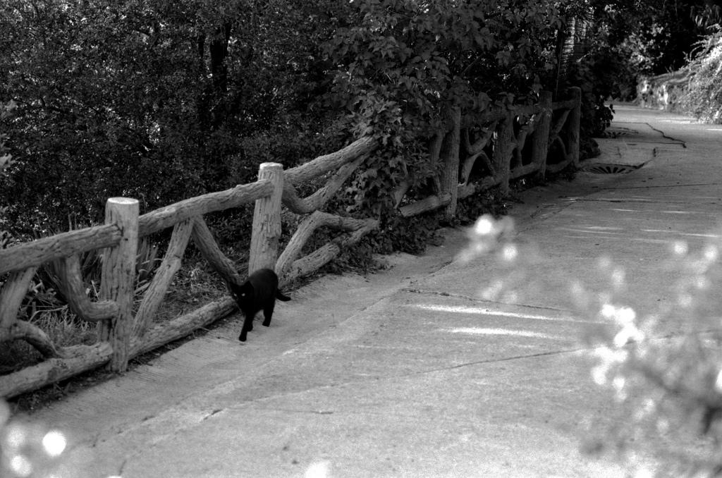 Un chat noir se promène