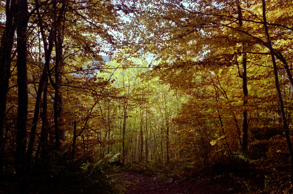 Foret en automne