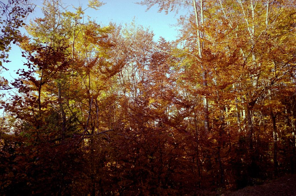 dans la foret en automne