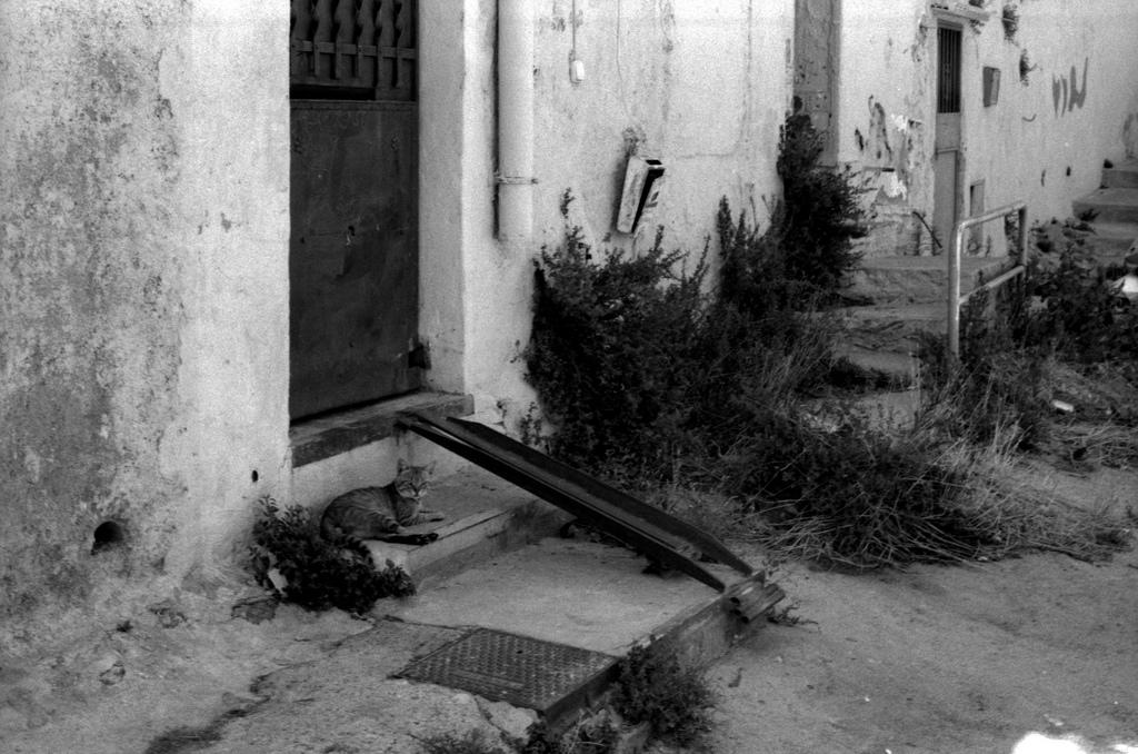 A cat near the door