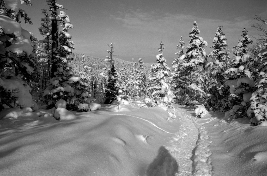 Snow in Vercors