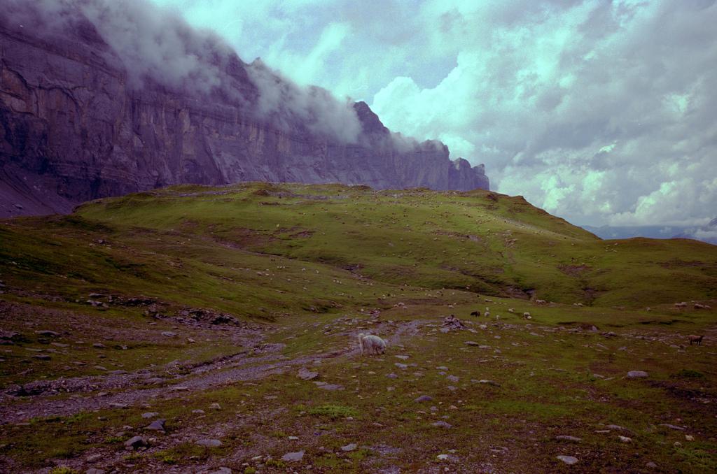 Moutons dans la montagne