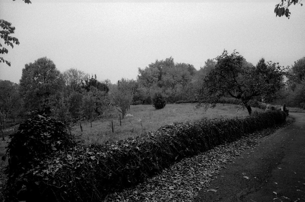 Autumn in a Village