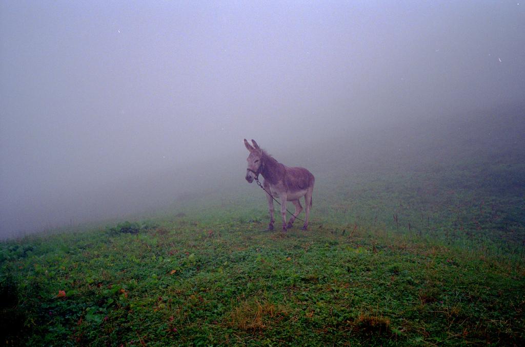 L'ane dans le brouillard