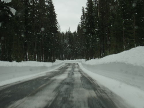 Road in the forest and the snow