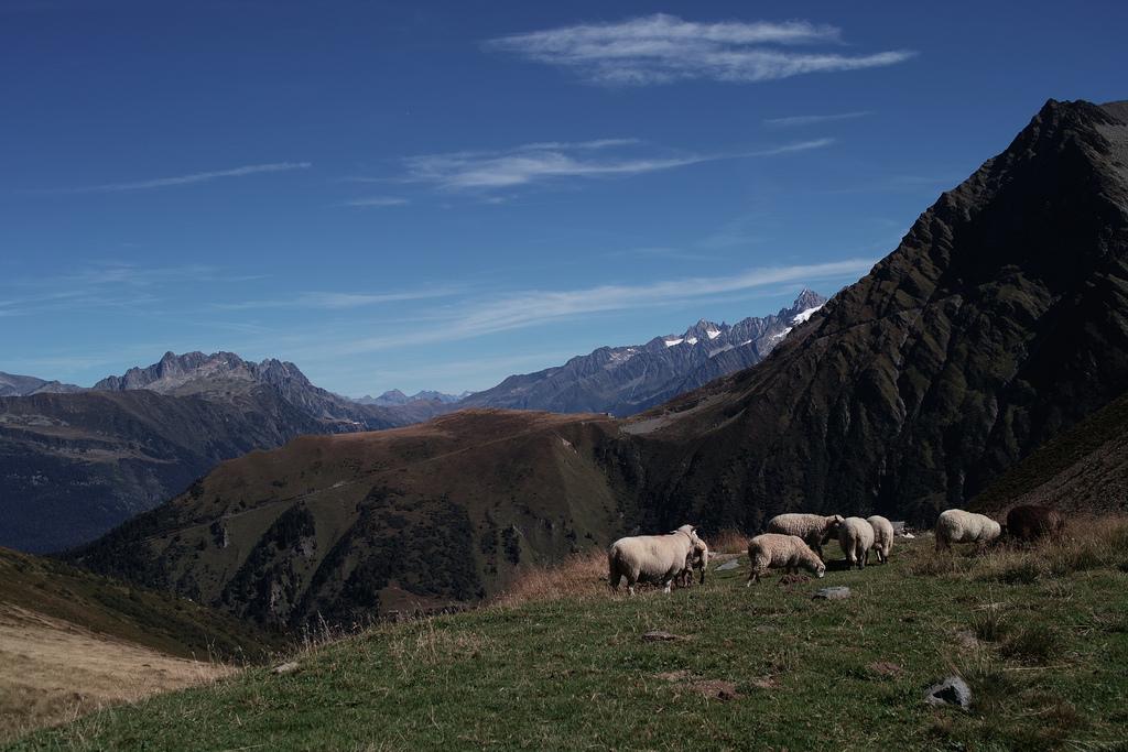 Des moutons au col de Tricot