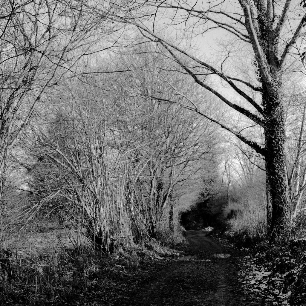 Un chemin dans la foret