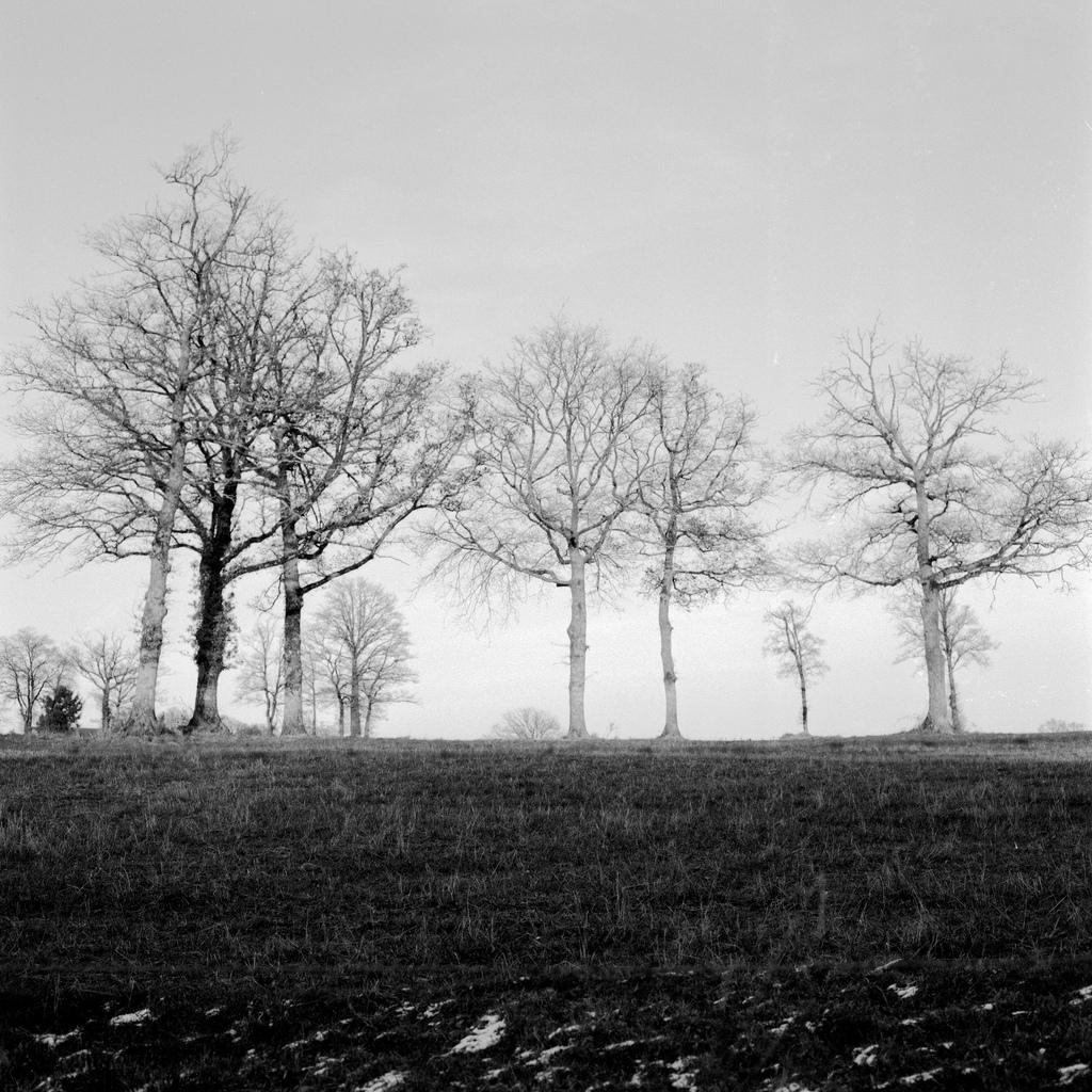 Des arbres dans un champ