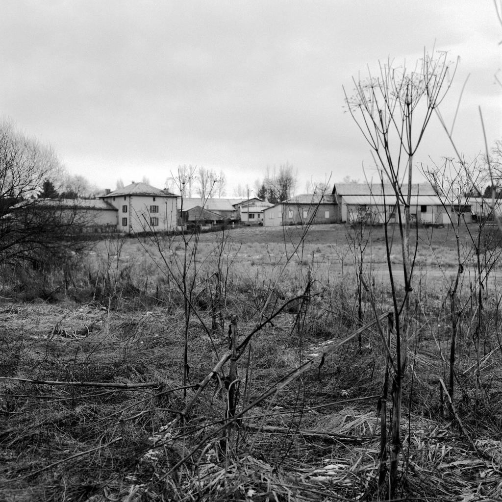 Dans un champ