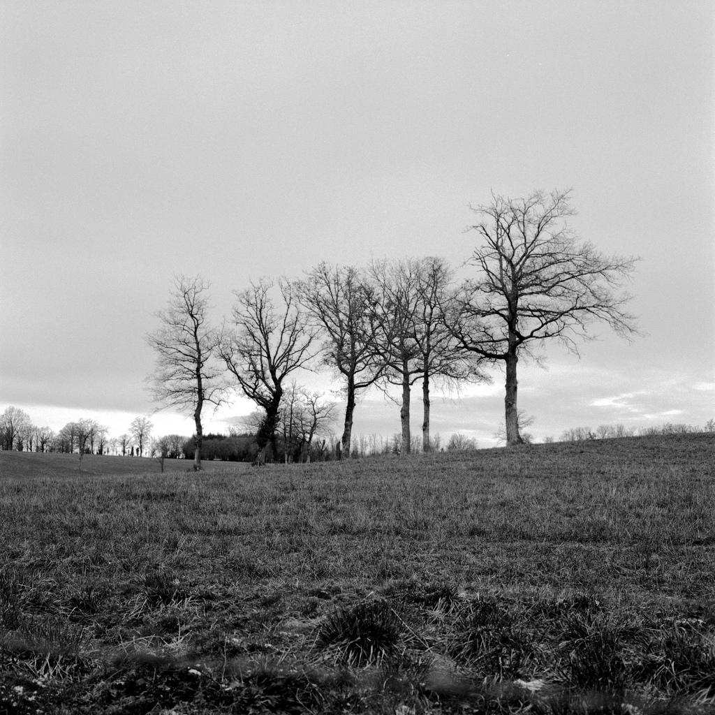 Des arbres au milieu d'un champ