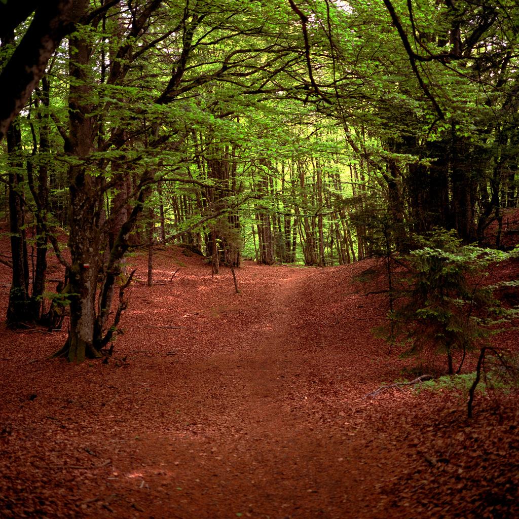 Foret dans les Vosges