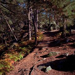 La Foret de Fontainebleau