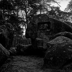 Foret de Fontainebleau près de Barbizon